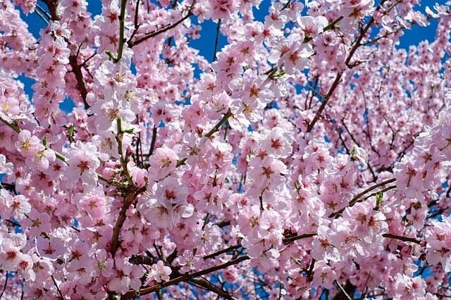 dr. Edward Bach a virágok megtalálója